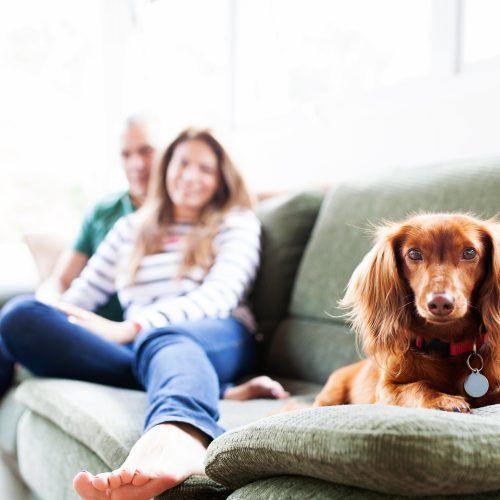 Couple on couch with dog